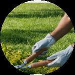 Podagem e jardinagem